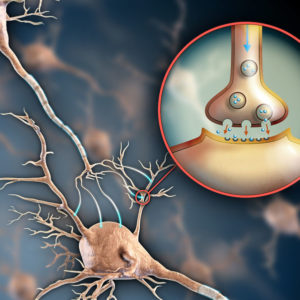 Neurotransmitter Balance